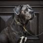 Kentucky Hondenlijn Gevlochten Nylon olijfgroen 2