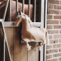 Kentucky Relax Paardenspeeltje Pony